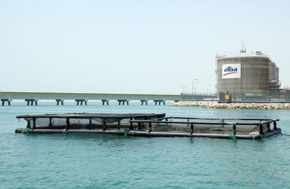 Alba Supports Biodiversity At Citra Plant Via New Fish Farm