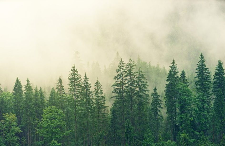 Rusal Plants Half A Million Trees In Irkutsk